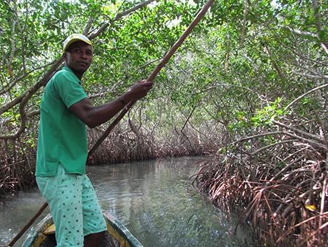 Mangrove Tunnels Canoe Tour2