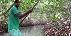 Mangrove Tunnels Canoe Tour6