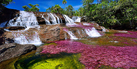 Caño Cristales Tour Package (3d/2n)